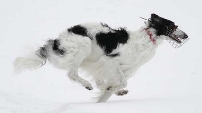 Cashmere-snowcoursing