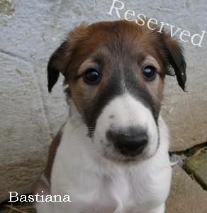 Bastiana